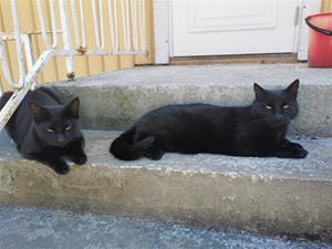 Elvis&Figaro