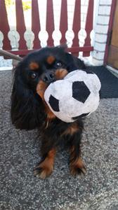 Sally med sin älskade boll