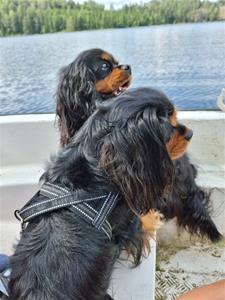 Sally& Arvid på en båttur
