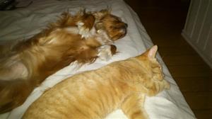 Vi sover oftas tillsammans, gärna hos matte.