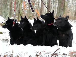 20140202 097, 5 hundar i skogen