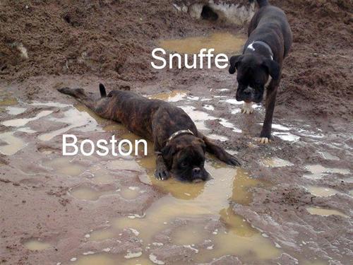 Snuffe & Boston