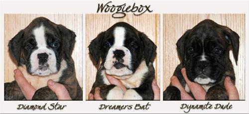 3 Woogieboxare