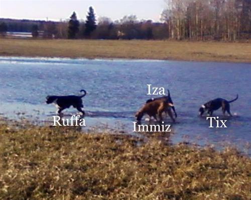 4 lyckliga hundar....