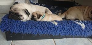 sova med mamma lila