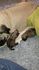 nyfödd tik 1 och 2