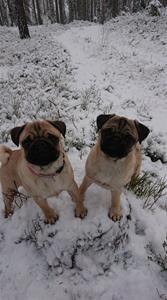 Darin och Lill-Babs i snön