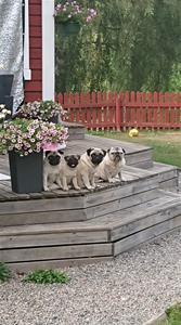 alla fyra på trappen