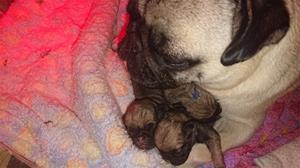 mor och tre barn