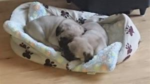 6 v sover  korgen