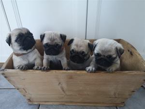 fyra tika i lådan
