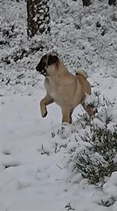 Lill-Babs i snön 1