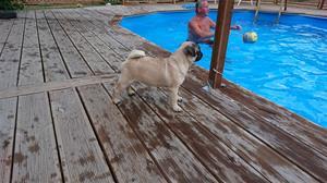 Lill-Babs vid poolen