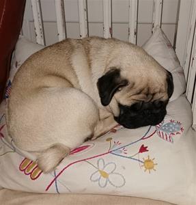 Adele hösten 20 sover i stol