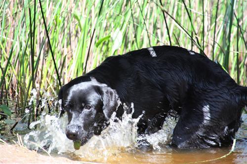 Sally i vatten