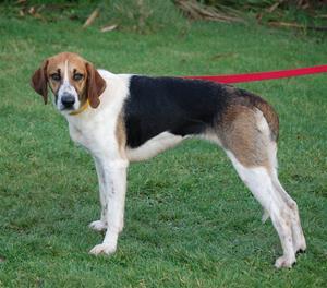 Hannah hound (5)