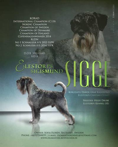Sigge annons