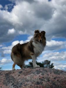 öckeröbilder hundarna