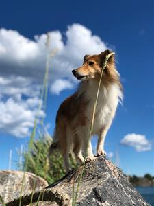 öckeröbilder hundarna2