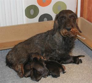 Tyra är en duktig mamma