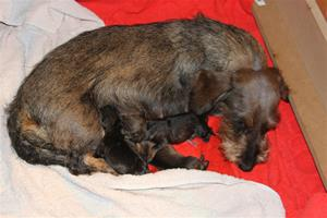 Nyfödda 2015-04-20