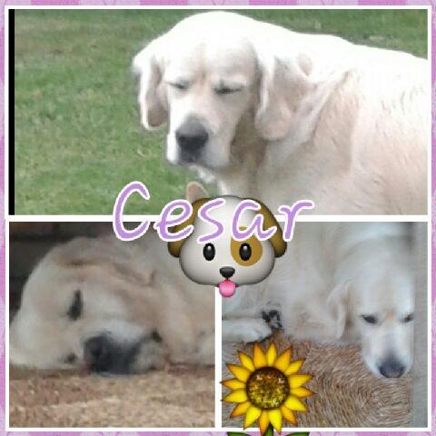Caesar collage