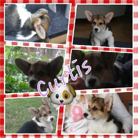 Curtis collage