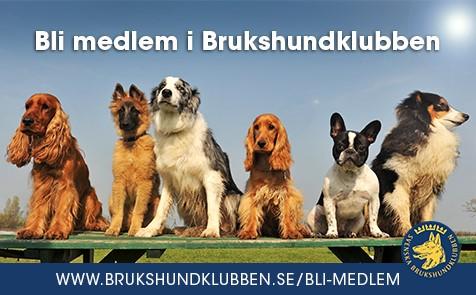 Bli medlem i Brukshundklubben