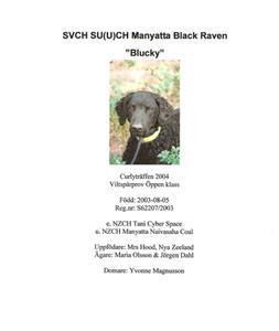 2004  SE VCH, SE U(u)CH Manyatta Black Raven S62207/2003  Född 2003-08-05 (Tani Cyber Space - Manyatta Naivasaha Coal)  Ägare: Maira Olsson & Jörgen Dahl, Vittinge Uppfödare: Mrs Hood, Nya Zeeland