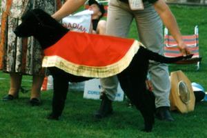 BIS 1996