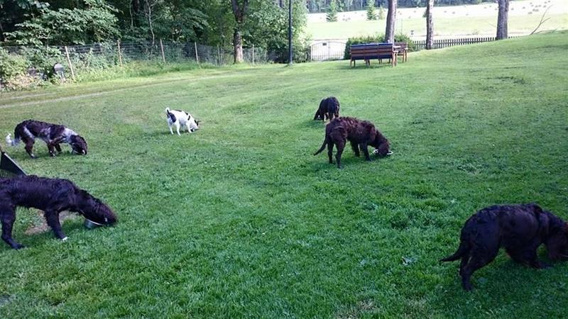 Våra hundar 1