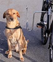 Cykelfäste Dogman