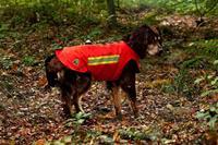 Dogtech ONE, grundväst