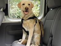 Säkerhetssele till bil