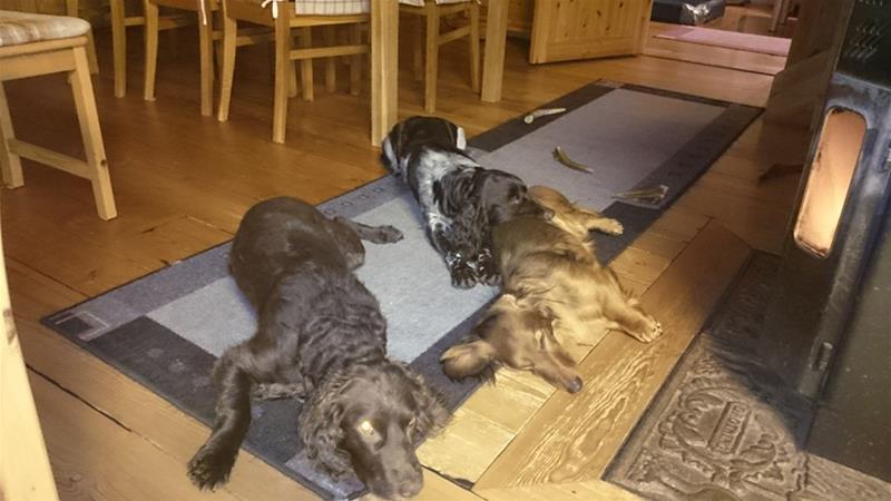 Våra hundar1