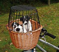 Cykelkorg pil, brun