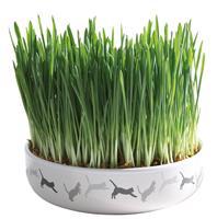 Kattgräs + keramikskål