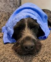 Active Canis Cooling Towel 66x43 cm